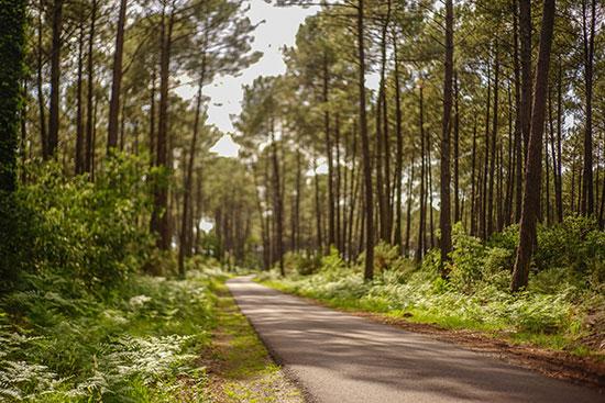 © La VeEin Fahrradweg in den Wäldern der Landes