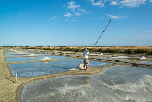 In den Salzgärten auf der Ile de Noirmoutier entsteht köstliches Fleur de Sel.