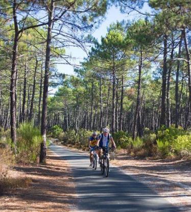 Zwei Radfahrer radeln durch einen Pinienwald an der französischen Atlantikküste